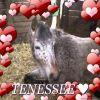 Profil de xx-tenessee