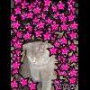 Profil de caro123456789