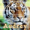 Profil de auddu1995